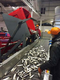 2015 Fishermen Helping Kids With Cancer Herring Sale
